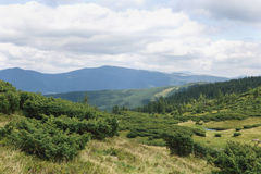 Mountain peaks, coniferous forest and green meadow Stock Images