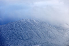 Mountain peaks covered with pine forests and surrounded by cloud. S Royalty Free Stock Photos