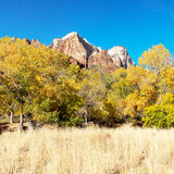 Mountain Peaks and Fall Colors in Zion National Park Utah. Rock formations and Fall Colors in the Trees in Zion National Park in Utah, United States of America Stock Images