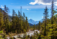 Mountain Peaks and Forests in Yoho National Park in the Rocky Mountains Royalty Free Stock Photography