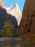 Mountain Peaks and the River in Zion National Park Utah. Rock formations and Fall Colors in the Trees along the river in Zion National Park in Utah, United Royalty Free Stock Photo