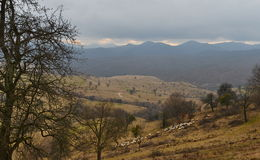 Mountain peaks before storm and herds of sheep. View of the Apuseni mountains from Capus village near Cluj-Napoca city, Transylvania, Romania, Europe Royalty Free Stock Photo