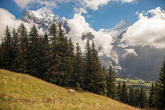 Mountain peaks, streams and meadows in Grindelwald, Switzerland Royalty Free Stock Image