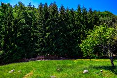 Mountain. This  photo is made in Vitosha mauntain Royalty Free Stock Photo