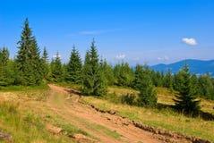 Mountain pine forest Royalty Free Stock Photos