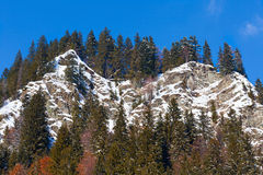 Mountain with pine forest stock photography