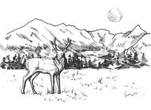 Mountain and pine forest landscape panorama. Vector illustration of a deer in mountain and pine forest landscape panorama. Vintage engraving style Royalty Free Stock Photography