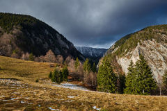 Mountain pine forests Stock Image