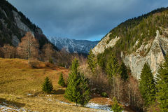 Mountain pine forests Stock Photos