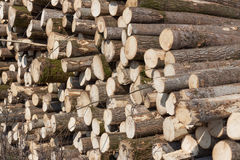 Mountain pine and spruce logs ready to be loaded onto timber. Stock Photography