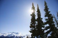 Mountain with pine trees. Royalty Free Stock Photos