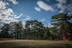 Roud into mountain pine forest. Stock Images