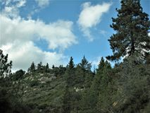 Mountain Pine Trees Under a Partly Cloudy Sky. Highway 74, Rivere County, California Stock Photography
