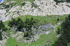 Mountain pines in Pyrenees Royalty Free Stock Image