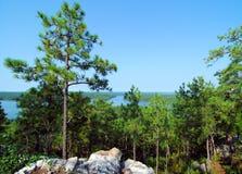 Mountain Pines Stock Photos