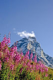 Mountain with pink flowers Royalty Free Stock Photos