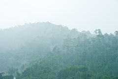 Mountain in rain. Mountain and forest in rain Royalty Free Stock Photos