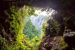 Panorama view of mountain rainforest, Madeira, Portugal Stock Photography