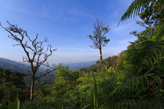 Mountain rainforests Stock Photos