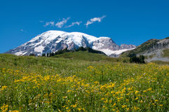 Mountain Rainier, Paradise Valley, meadows Royalty Free Stock Photo