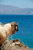 Mountain ram over blue sea Stock Image