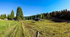 Mountain ranch in green idyllic woods nature. Blue sky forest pine tree and country road or path covered in grass Stock Image