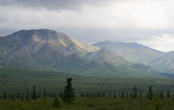 Mountain range Denali National Park Alaska Royalty Free Stock Images