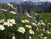 Hill with wildflowers in a mountain landscape stock images