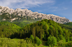 Mountain range with lush forest at its base. Mountain range with green lush forest at its base and a bright blue sky above stock images
