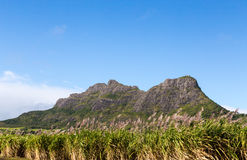 Mountain range in Mauritius with sugar cane field.  royalty free stock images