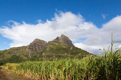 Mountain range in Mauritius with sugar cane field.  royalty free stock photo