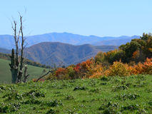 Mountain range in smokey mount. Colorful fall foilage with mountain range and blue skys in the distance Stock Photo