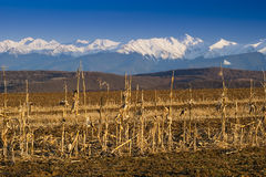 Mountain range snow peaks cultivated land. In spring Fagaras Transylvanian Alps Stock Images