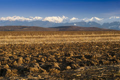 Mountain range snow peaks plowed field. Mountain range snow peaks plowed cultivated field in spring Fagaras Transylvanian Alps Royalty Free Stock Images