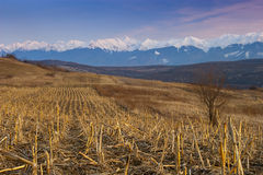 Mountain range snow peaks plowed field. Mountain range snow peaks plowed cultivated field in spring Fagaras Transylvanian Alps Stock Photography