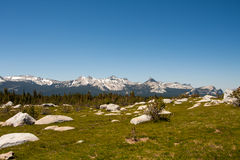 Mountain Range Vista. Vista of Yosemite's granite peaks along the Young Lakes Trail, Yosemite National Park Royalty Free Stock Images