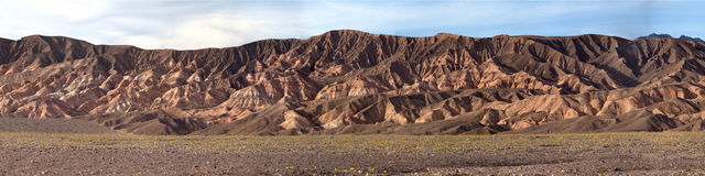 Mountain Range with Wildflowers. Mountains with wild flower blooms in Death Valley CA stock photography