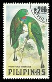 Mountain Raquet tailed Parrot Stock Photos
