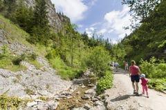 Mountain ravine Stock Images