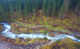 Mountain сreek in forest from above Stock Images