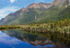 MOUNTAIN REFLECTION IN THE BANKS OF MIRROR LAKE. The lush green mountain sides of the Fiordland National Park are perfectly reflected in the waters of Mirror Stock Image