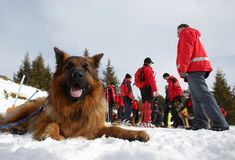 Mountain Rescue Service Red Cross dog Royalty Free Stock Photography