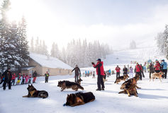 Mountain Rescue Service rescuers with rescue dogs Royalty Free Stock Photos
