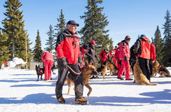 Mountain Rescue Service rescuers with rescue dogs Stock Photography