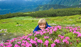 Mountain rhododendron blossoming Royalty Free Stock Image