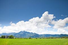 Mountain and rice field stock photos