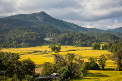 Mountain rice field Stock Photography