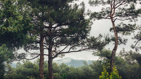 Mountain ridge in a frame of trees in foregroundin cloudy weather concept of world freedom and travel Stock Image