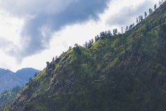 Mountain ridge with tall evergreen trees. royalty free stock photo
