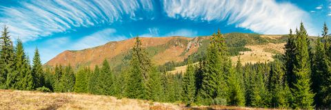 Mountain ridge under the gorgeous sky with clouds. Panorama of a mountain ridge under the gorgeous sky with clouds. spruce forest on the nearest hill. beautiful royalty free stock photo